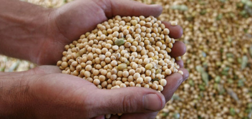 "Soy beans are seen after being harvested in the outskirts of Gualeguaychu city, 230 km (143 miles) north of Buenos Aires, March 30, 2008.  Sometimes called ""green gold"" of the Pampas, soybeans have brought new prosperity to the Argentine countryside, but with that prosperity comes controversy over how to share the bounty of high global prices. To match feature AFGLATION-LATAM/REUTERS/Andres Stapff (ARGENTINA)"