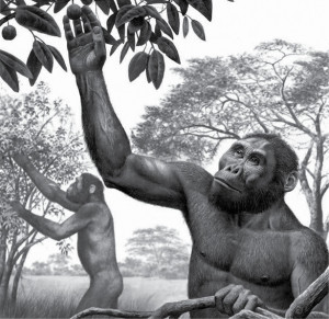 Evolucion-humana_BYN