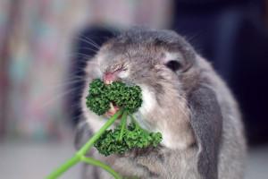 perejil_conejo