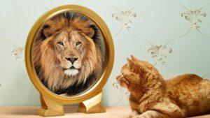 Gato-espejo-leon