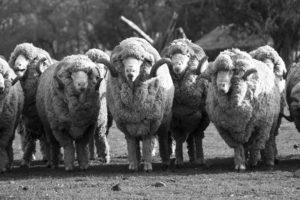 carneros-federico-06584